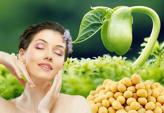 Tinh chất mầm đậu nành là dạng bào chế tối ưu và hiệu quả nhất của mầm đậu nành